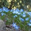 blue-flowers-745160_1920