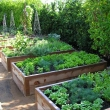 Perfect-Raised-Garden-Beds-Layout-Design-8