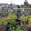 vegetables-on-the-balcony-creating-a-raised-bed-garden-5-955