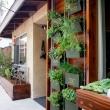 773c50d20eae269271f029ab50a1079c--hanging-herb-gardens-vertical-herb-gardens