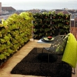 vegetables-on-the-balcony-creating-a-raised-bed-garden-0-955