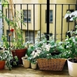 vegetables-on-the-balcony-creating-a-raised-bed-garden-1-955