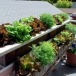 vegetables-on-the-balcony-creating-a-raised-bed-garden-7-955