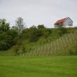 kombinat-janez-marolt-vineyard-cottage-in-kozjansko-slovenia