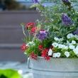 Best 113 wash tubs ideas on Pinterest Design Ideas of galvanized buckets wedding