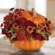 pumpkin-12