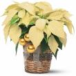 9a3262fc8b96ceead8e974d88eff03b1--poinsettia-flower-christmas-flowers