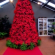 best-ideas-about-poinsettia-tree-on-pinterest-xmas-afrodecor