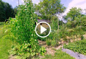 Vrt Brestanica